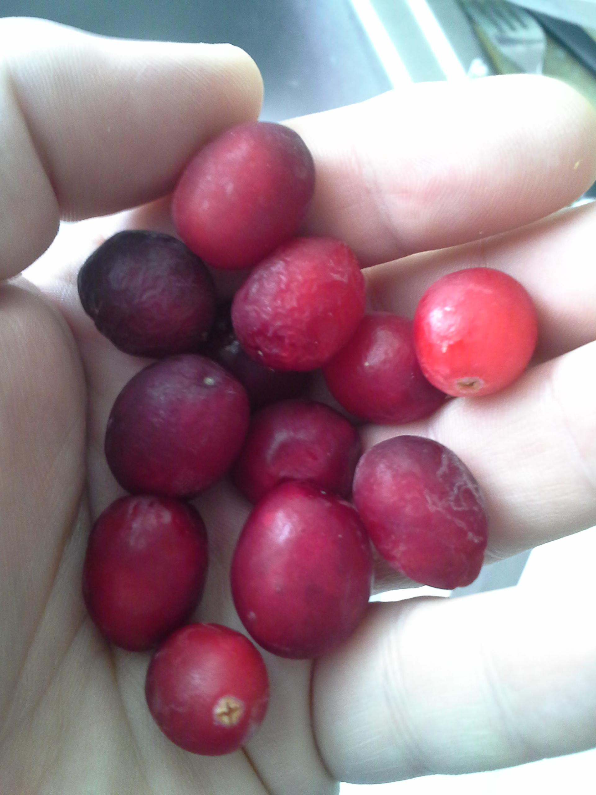 Breakfast: 10:30 a.m. | 12 cranberries